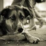 Бездомная-собака